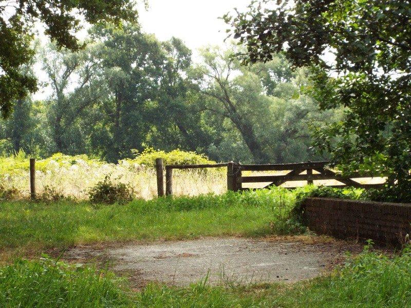 Uitzicht over grasland in het Dubbroek