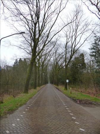 De weg naar Riel