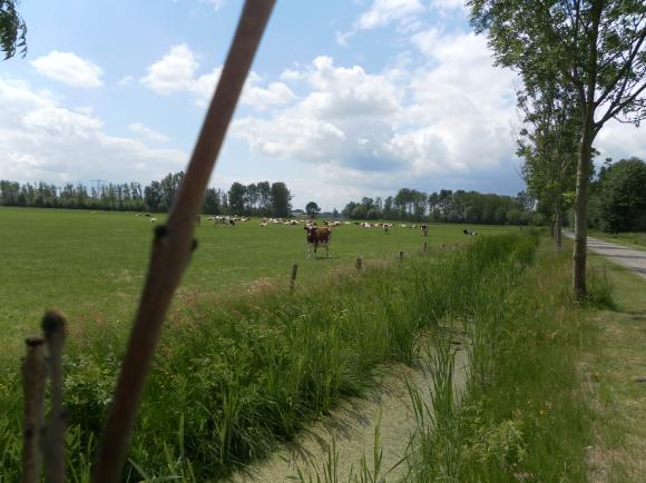 Volop genieten van het platteland zoals de koeien