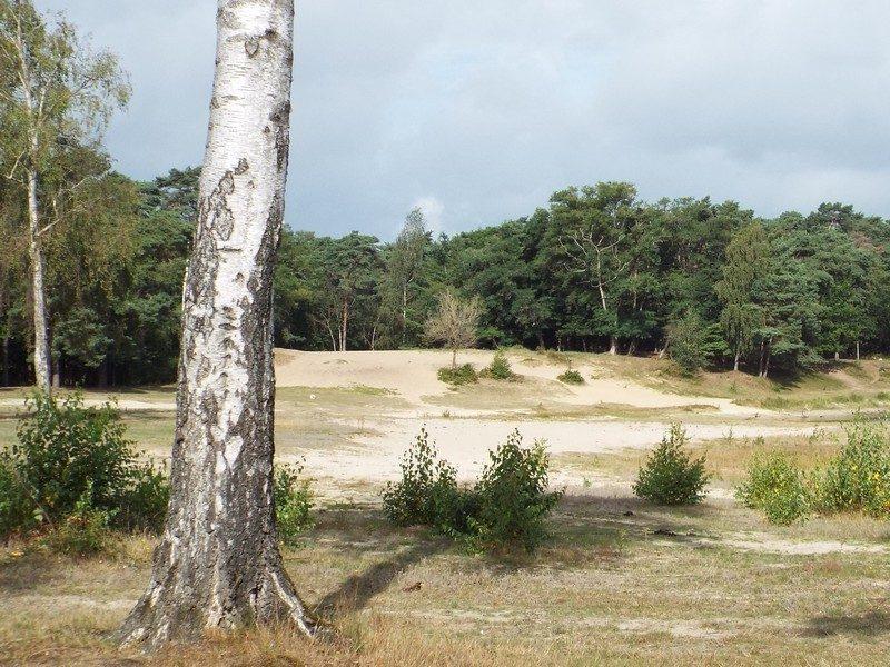 Lange Heide