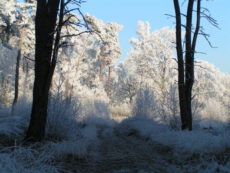Mooi winters bospad
