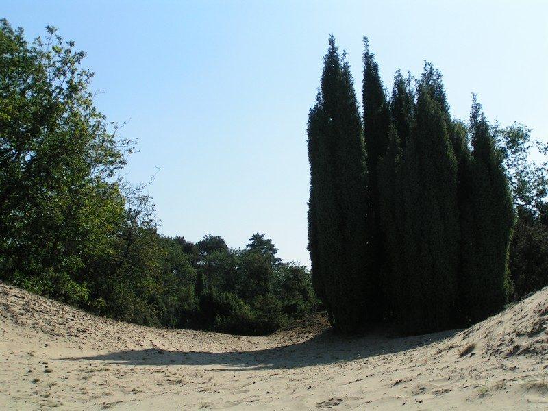 Boshuizerbergen