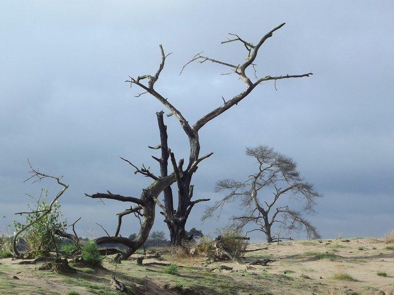 De gevolgen van de grote natuurbrand in 2010