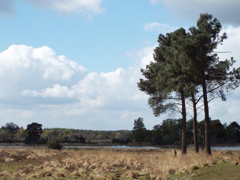 Uitzicht over de Strabrechtse Heide