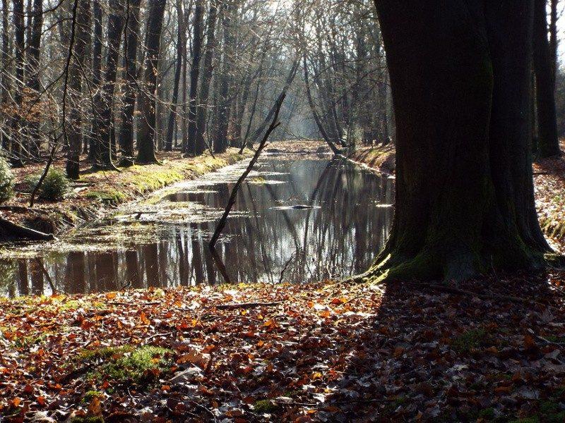 Deel van het Koordekanaal dat in het bosgebied nog herkenbaar is