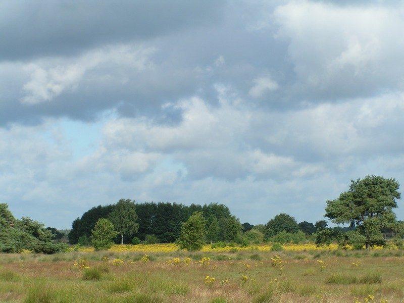 De Groote Heide