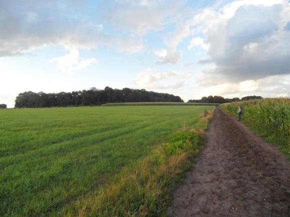 wandelen tussen weilanden en maisvelden