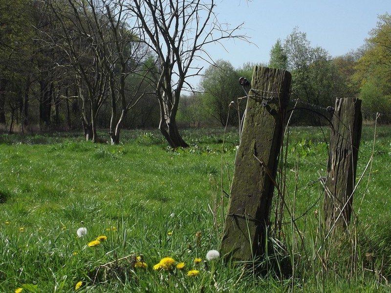 Dit grasland is in het verleden onderdeel van het Groot Huisven geweest