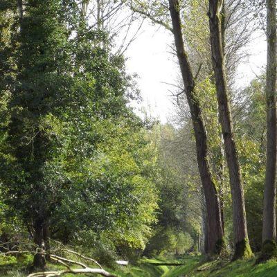 Wandelroute Scheeken-tocht, te Liempde
