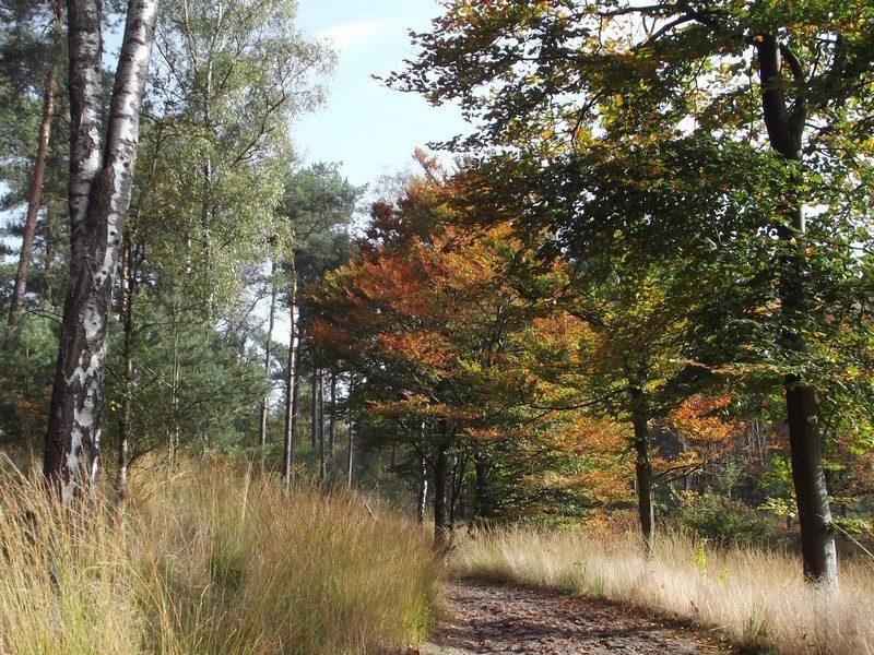 Natuurgebied Oisterwijkse Bossen en Vennen