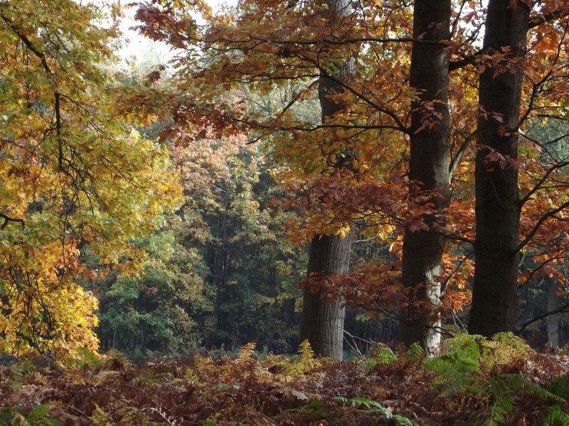 Het landgoed De Oude Hondsberg