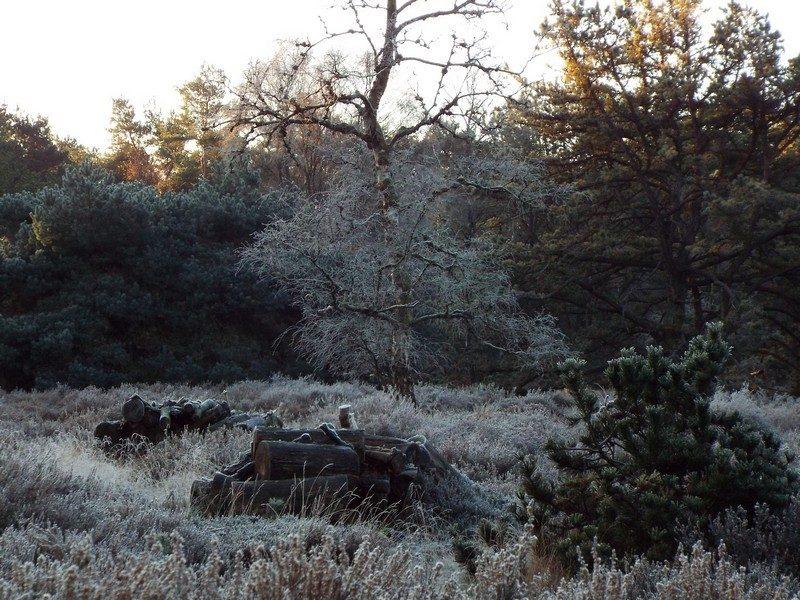 Het natuurgebied de Stippelberg