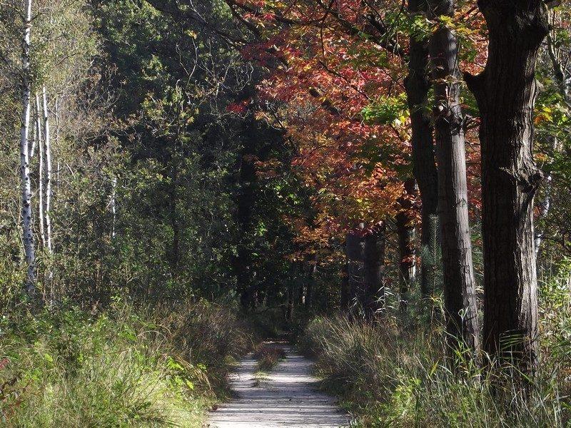 De Kampina, de eerste herfstkleuren