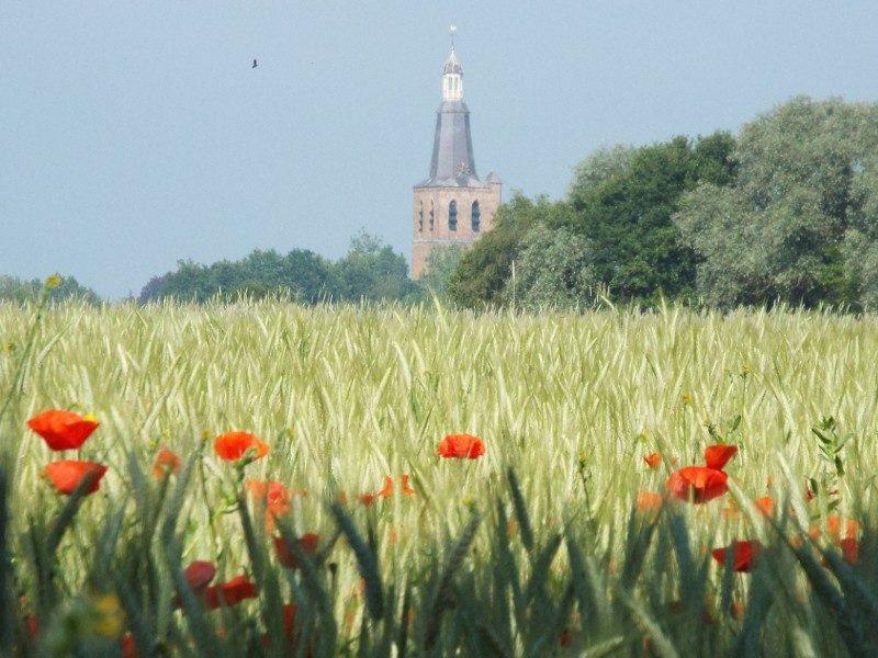 In de verte de knoptoren in Sint Oedenrode