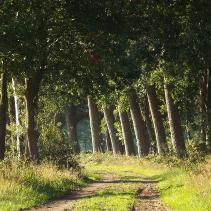 Wandelroute Olland-route, te Liempde
