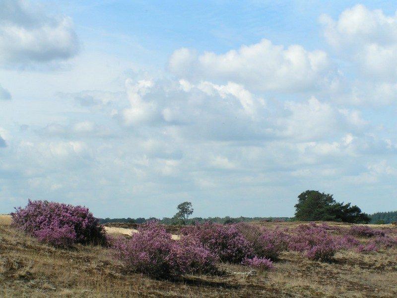 Strabrechtse Heide, de Galgenberg