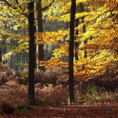 Wandelroute Oude Graaf-route, te Maarheeze