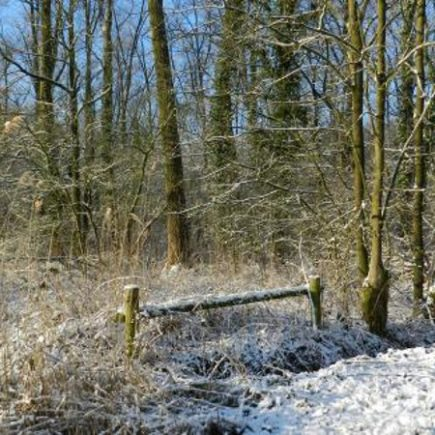 Wandelroute Geelders-route, te Liempde