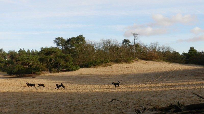 Hondenlosloopgebied