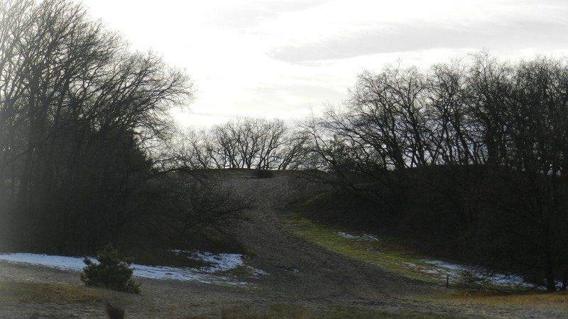 Kruin van een boom