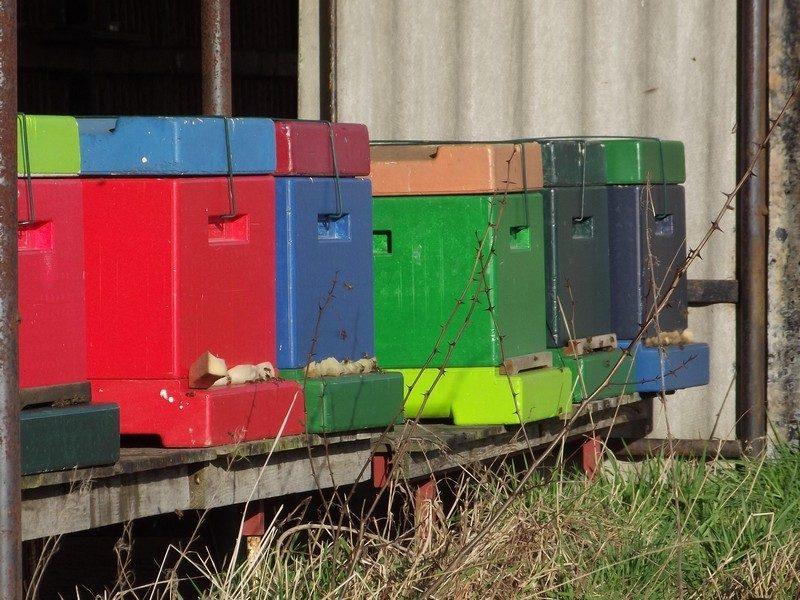 Bijenkasten in Landgoed Genegenterhof