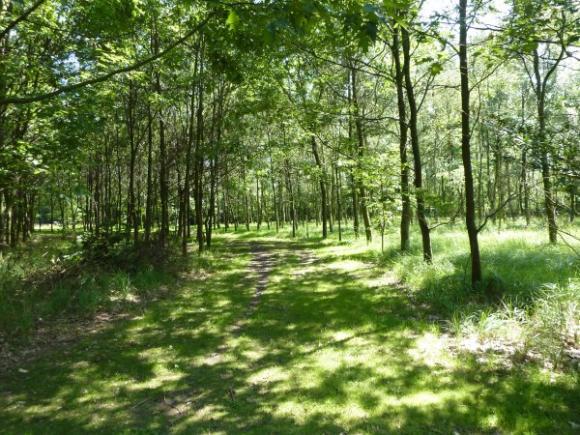 De bossen van Sint Jan Baptist te Zelzate