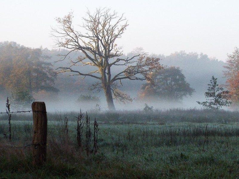 Slabroek in de ochtend mist
