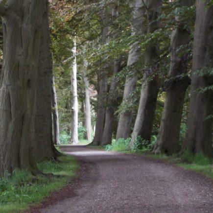 Wandelroute Broek en Donk-route, te Sint-Michielsgestel