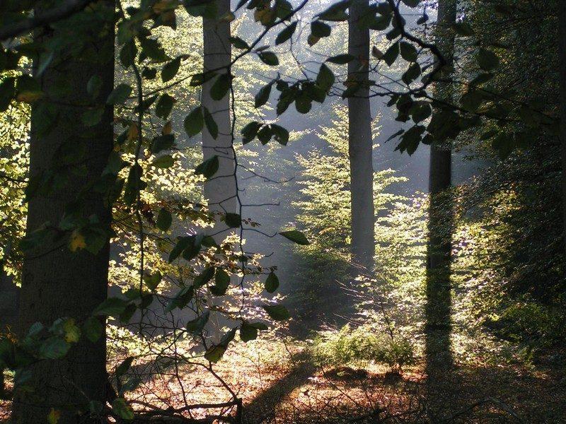 Landgoed Zuylenstein