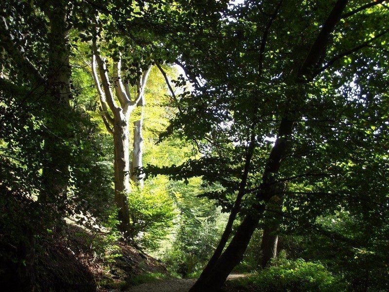 Natuurgebied Sint Jansberg