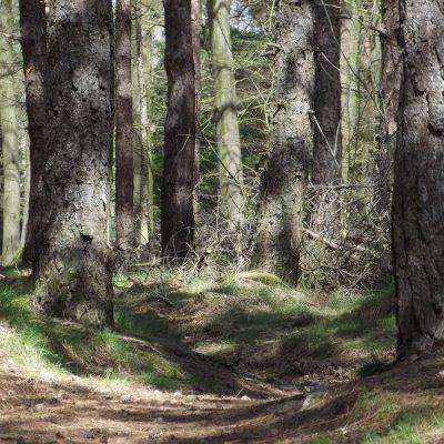 Wandelroute Hazeldonkse-route, te Liessel