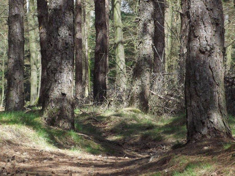De Liesselse bossen