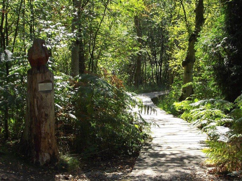 Knuppelbrugje met houten beeld van een buizerd