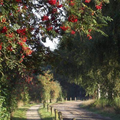 Wandelroute Vlasroot-de kleine tocht, te Riethoven