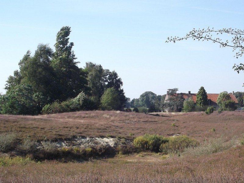 Heidegebiedje met boerderij in de verte