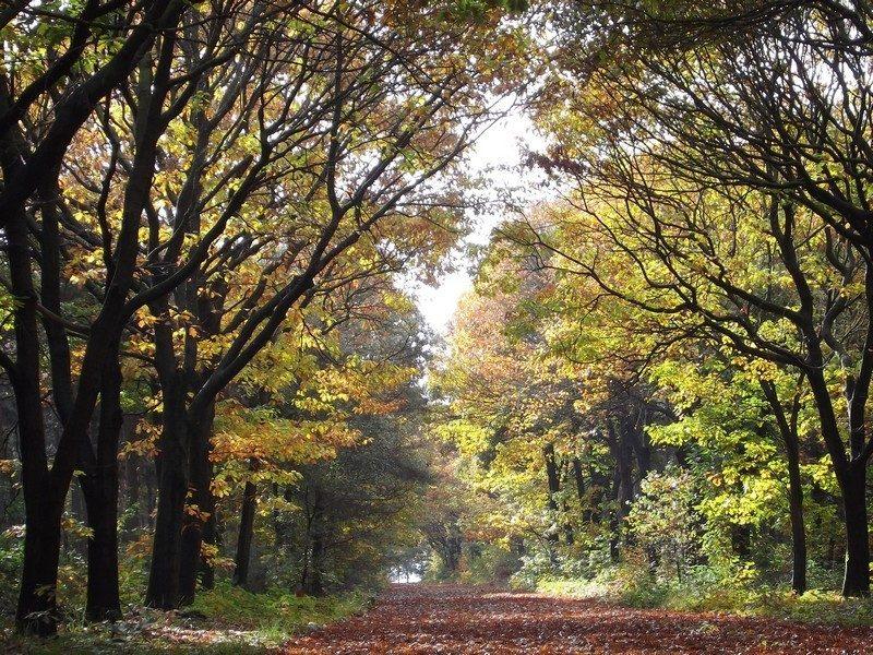 Het bosgebied Kempkensberg
