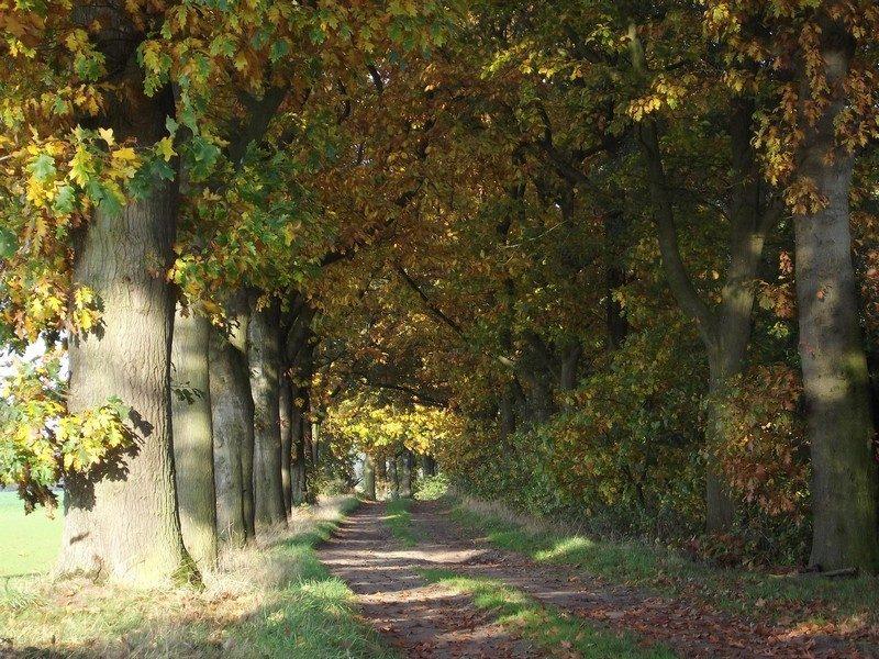 De Grote Moost, pad door het gebied