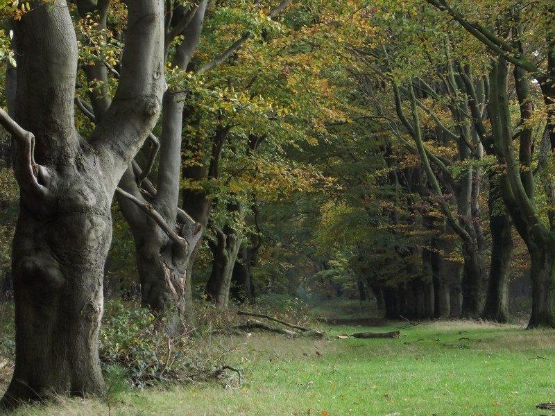 Landgoed Huis ter Heide