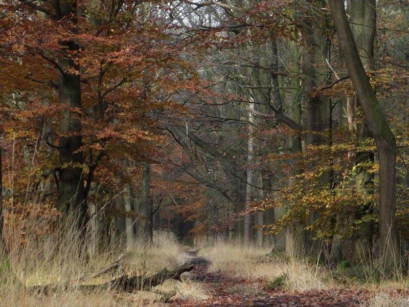 De Geelders, het is herfst