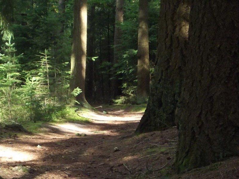 Boswachterij de Kempen, donker bospad