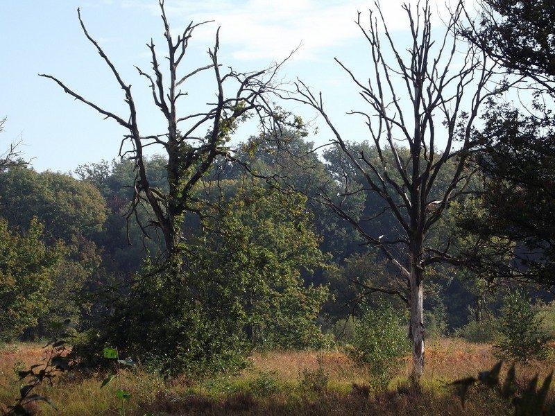 De Geelders, open plek in het bos