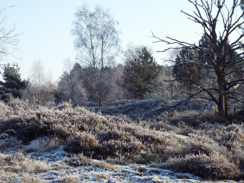 Hiepterheide in de winter