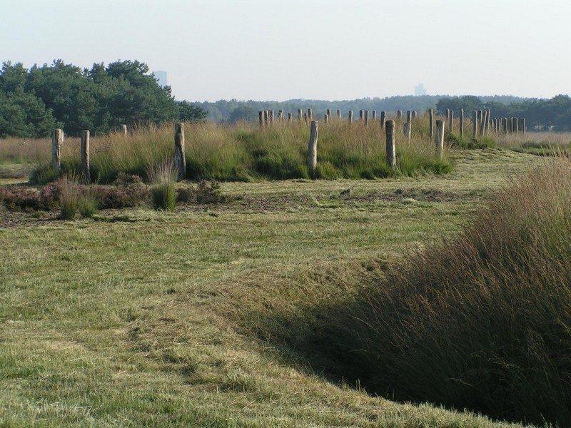 Grafheuvels uit de Midden-Bronstijd, nu in een ander seizoen