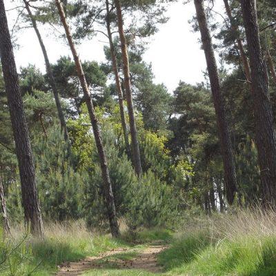 Wandelroute Ommetje Het Mortelke, te Borkel en Schaft