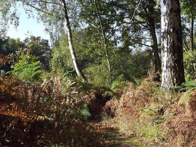 Het Cranendonckse bos