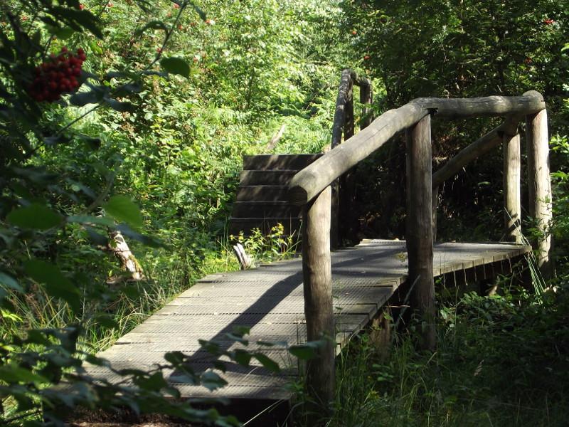 Knuppelbrugje in het Koebos