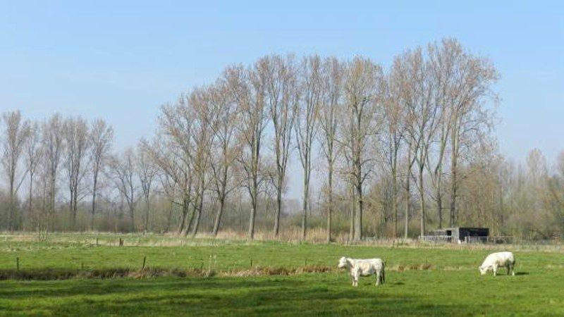 Tussen Liempde en Kasteren.