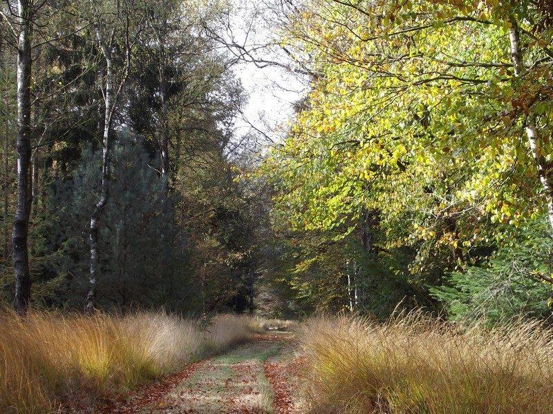 Bosgebied de Nederheide