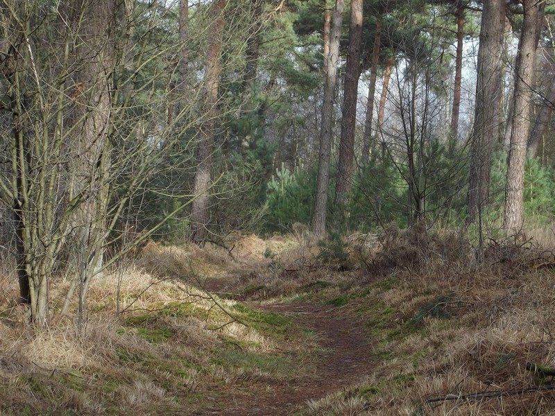 Bosgebied de Nederheide, een van de smalle paadjes