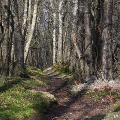 Wandelroute Lollebeek-tocht, te Castenray
